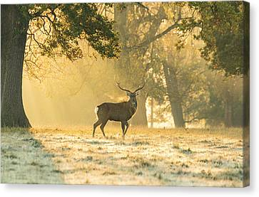 Canvas Print featuring the photograph Autumn Frost by Scott Carruthers