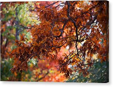 Autumn Fury Canvas Print