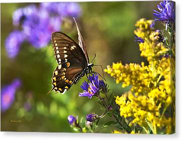 Autumn Garden Butterfly Canvas Print by Christina Rollo