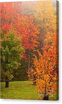 Smokey Mountains Canvas Print - Autumn Gathering by Dan Carmichael