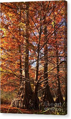 Canvas Print featuring the photograph Autumn Grandeur At Lake Murray by Tamyra Ayles