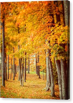 Autumn Grove  Canvas Print by Lisa Russo