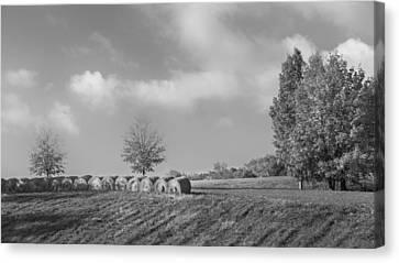 Autumn Hay Bw Canvas Print