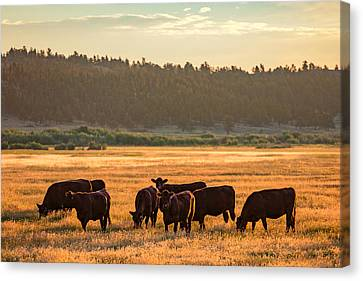 Autumn Herd Canvas Print by Todd Klassy