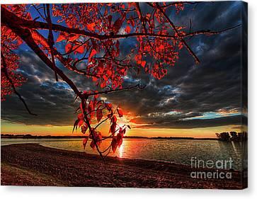 Autumn Illumination Canvas Print