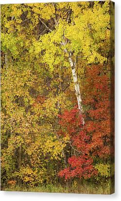 Autumn Impressions Canvas Print