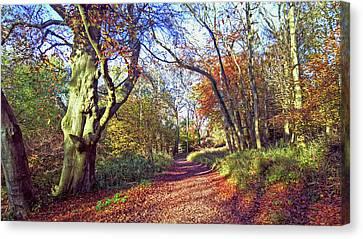 Autumn In Ashridge Canvas Print by Anne Kotan