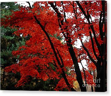 Autumn In New England Canvas Print by Melissa A Benson