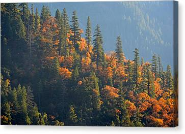 Canvas Print featuring the photograph Autumn In The Feather River Canyon by AJ Schibig