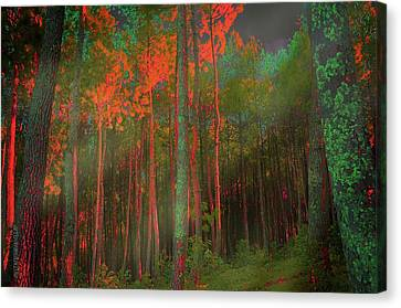 Canvas Print featuring the photograph Autumn In The Magic Forest by Mimulux patricia no No