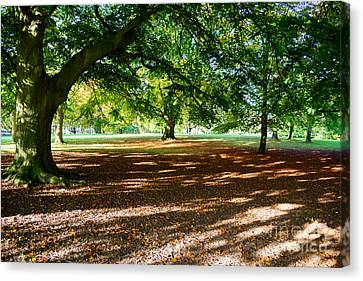 Canvas Print featuring the photograph Autumn In The Park by Colin Rayner