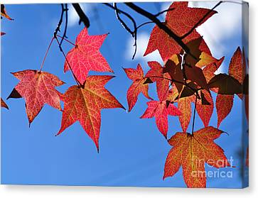 Autumn In The Sky Canvas Print by Kaye Menner