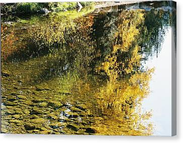 Autumn In The Water Canvas Print