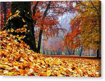 Autumn In The Woodland Canvas Print by Hannes Cmarits