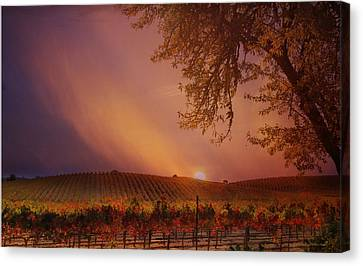 Autumn In Wine Country Canvas Print by Stephanie Laird