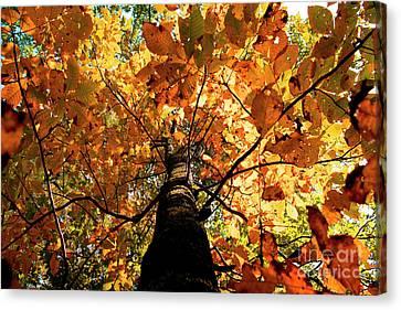 Autumn Is Glorious Canvas Print