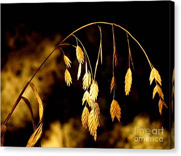 Autumn Jewelery Canvas Print