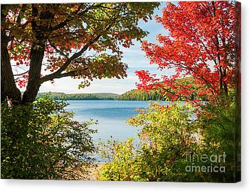 Canvas Print featuring the photograph Autumn Lake by Elena Elisseeva