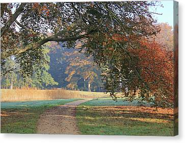 Autumn Landscape With Colored Trees In Park, Netherlands Canvas Print