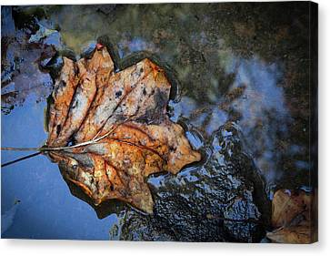 Canvas Print featuring the photograph Autumn Leaf by Debra and Dave Vanderlaan