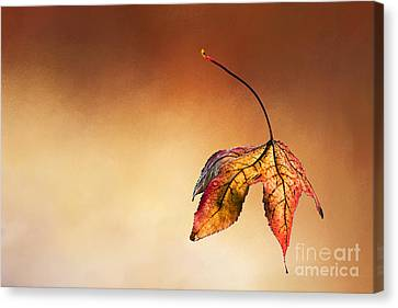 Autumn Leaf Fallen Canvas Print by Kaye Menner