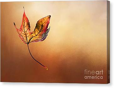 Autumn Leaf Falling By Kaye Menner Canvas Print by Kaye Menner