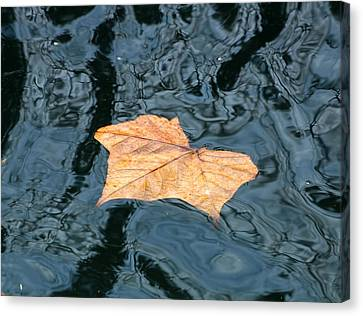Canvas Print featuring the photograph Autumn Leaf Floating On Water by Sheila Brown