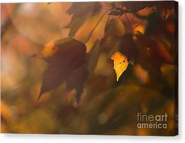Autumn Leaf In Sunshine Canvas Print by Diane Diederich