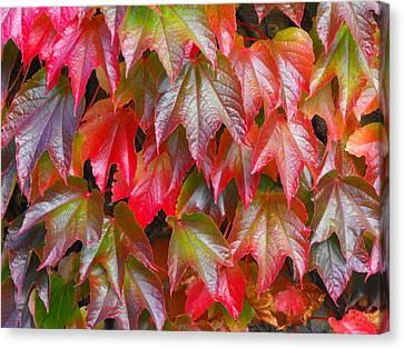 Autumn Leaves 01 Canvas Print