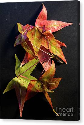 Autumn Leaves 1 Canvas Print