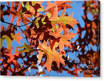 Autumn Leaves 17 Canvas Print by Jean Bernard Roussilhe