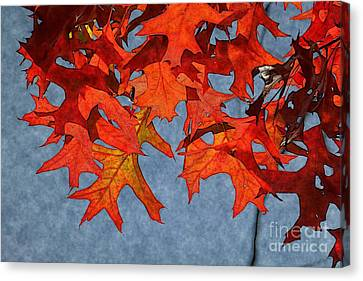 Autumn Leaves 19 Canvas Print by Jean Bernard Roussilhe