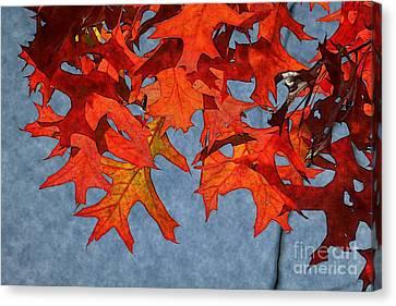 Autumn Leaves 19 Canvas Print by Jean Bernard Roussilhe