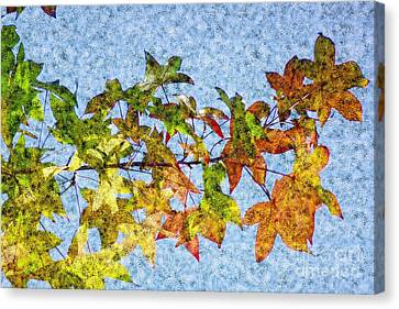 Canvas Print featuring the photograph Autumn Leaves 2 by Jean Bernard Roussilhe