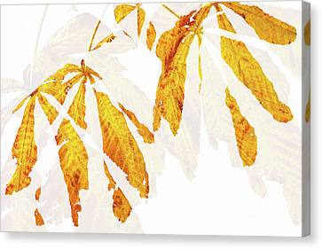 Autumn Leaves Abstract 2 Canvas Print