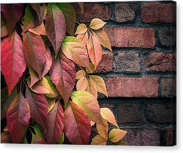 Canvas Print featuring the photograph Autumn Leaves Against Brick Wall by Julie Palencia