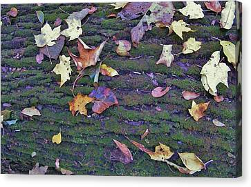 Autumn Leaves And Moss On Log   Indiana Canvas Print by Rory Cubel