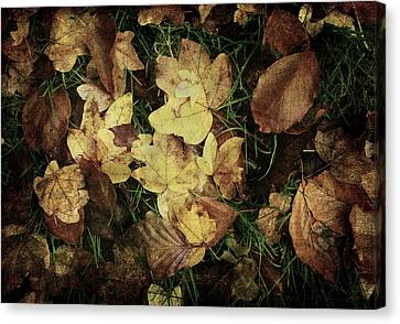 Autumn Leaves Are Falling Down... Canvas Print by Vittorio Chiampan