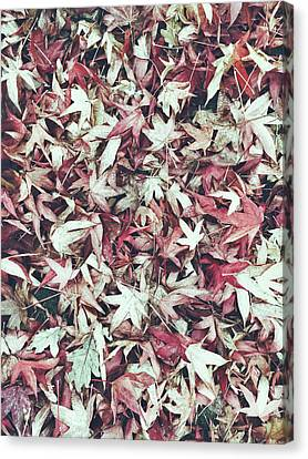 Autumn Leaves Background Canvas Print by Tom Gowanlock