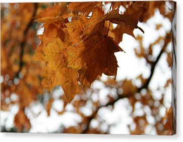Foliage Canvas Print - Autumn Leaves- By Linda Woods by Linda Woods