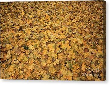 Autumn Leaves Canvas Canvas Print by Carol Groenen