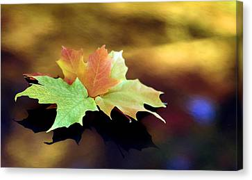Autumn Leaves  Canvas Print by Dmitriy Margolin