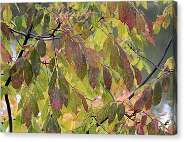Canvas Print featuring the photograph Autumn Leaves by Doris Potter