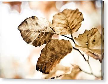 Autumn Leaves Canvas Print by Frank Tschakert