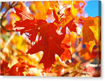Autumn Leaves Canvas Print by Gloria Pasko