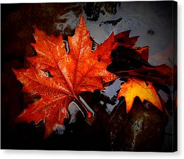 Autumn Leaves In Tumut Canvas Print by Lexa Harpell