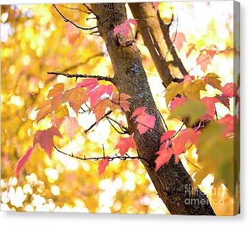 Canvas Print featuring the photograph Autumn Leaves by Ivy Ho
