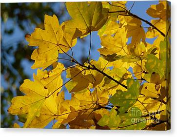 Canvas Print featuring the photograph Autumn Leaves by Jean Bernard Roussilhe