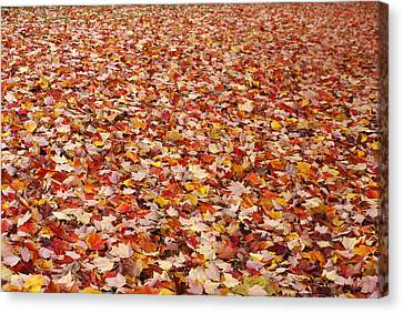 Autumn Leaves Canvas Print by Marilyn Wilson