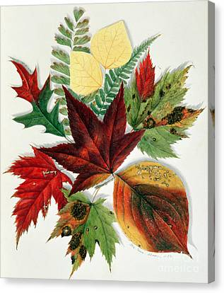 Autumn Leaves Canvas Print by Nina Moore